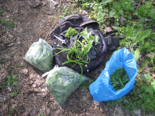 Wild foodplants gathered in an hour near the Water of Leith.