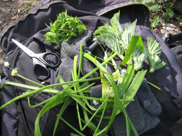 From top left, clockwise: sticky willy (cleavers or goosegrass), common hogweed and few-flowered leek