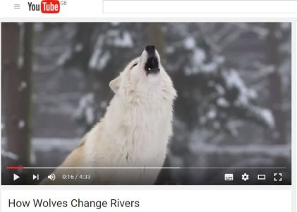 How Wolves Change Rivers: this short video is an inspiring introduction to the topic of re-wilding, and the reintroduction of formerly native species.