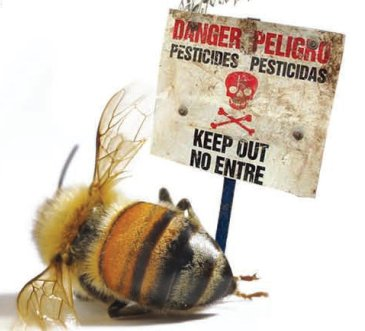 pesticides and dead bee